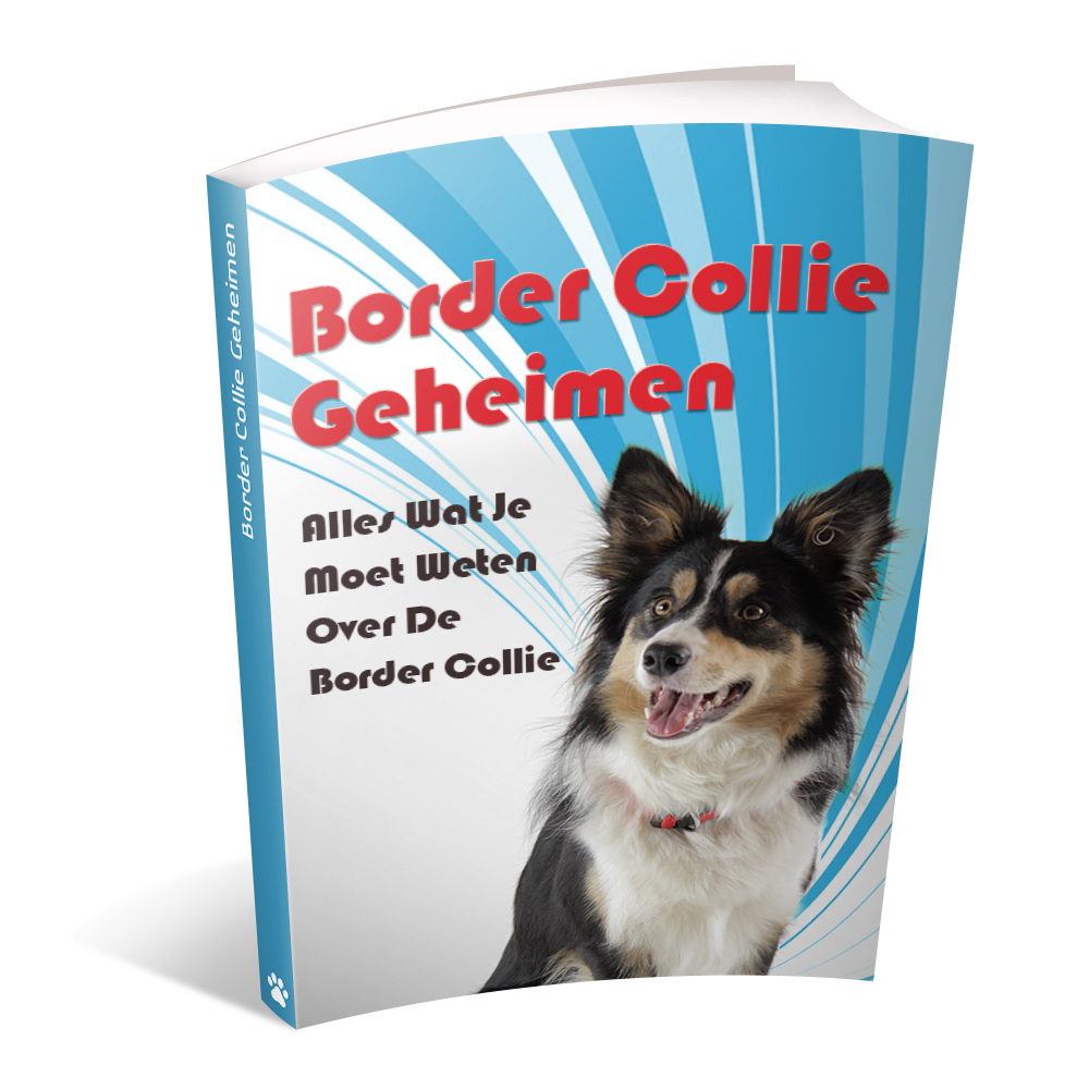 Karakter Border Collie