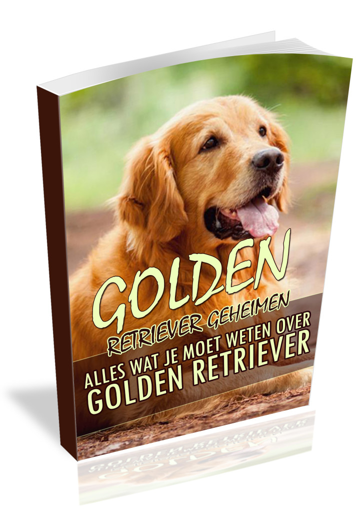 Karakter Golden Retriever